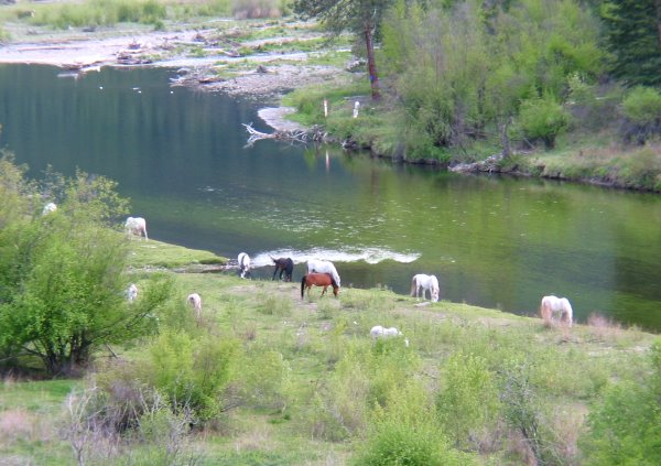 Montana Ranches & Recreation Properties